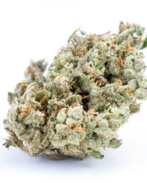 Jack Herer Cannabis Strain UK