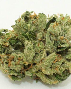 Loud Cannabis Strain