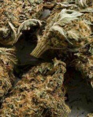 Buy Aceh Marijuana Strain UK