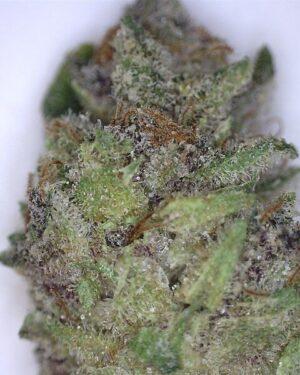 BF Blue Cheese Cannabis Strain