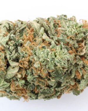 Buzz Light Gear Marijuana Strain