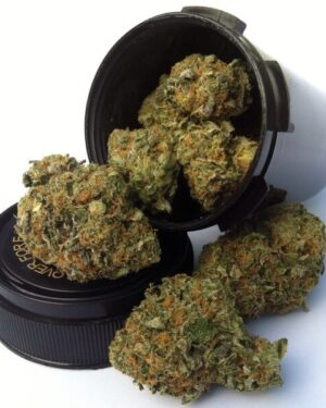 A2 Cookies Marijuana Strain